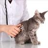 Ветеринарные клиники в Красноуфимске